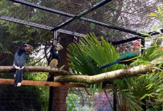 tropical birds penycae inn zoo